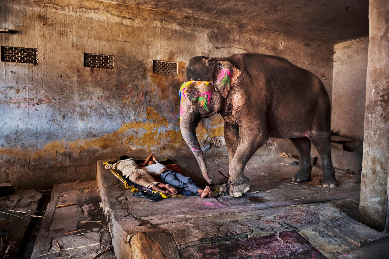 """Alle Fotos © Steve McCurry""""  """"aus Indien (Prestel Verlag, 2015)"""" Rajasthan, 2012. Mahuts schlafen bei ihren Elefanten."""